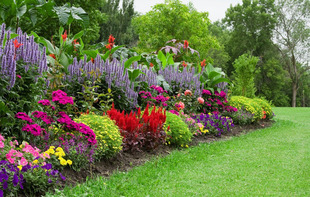 What Plants to Select for a Garden